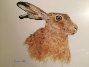 JTK Hare